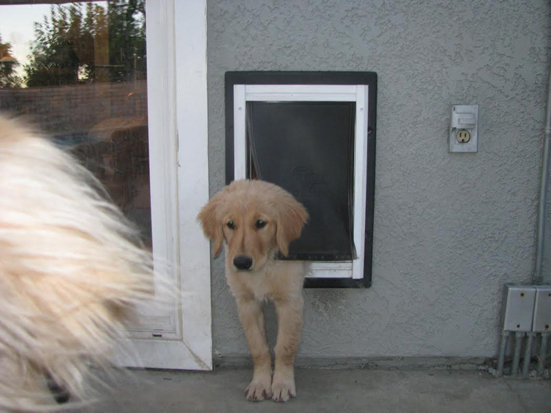 best dog door