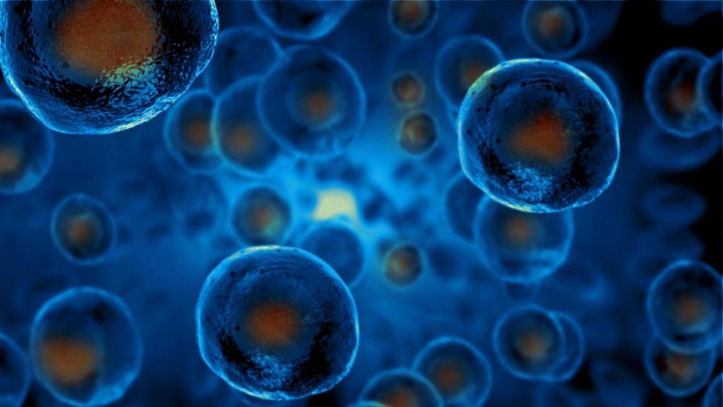 The Future of Regenerative Medicine